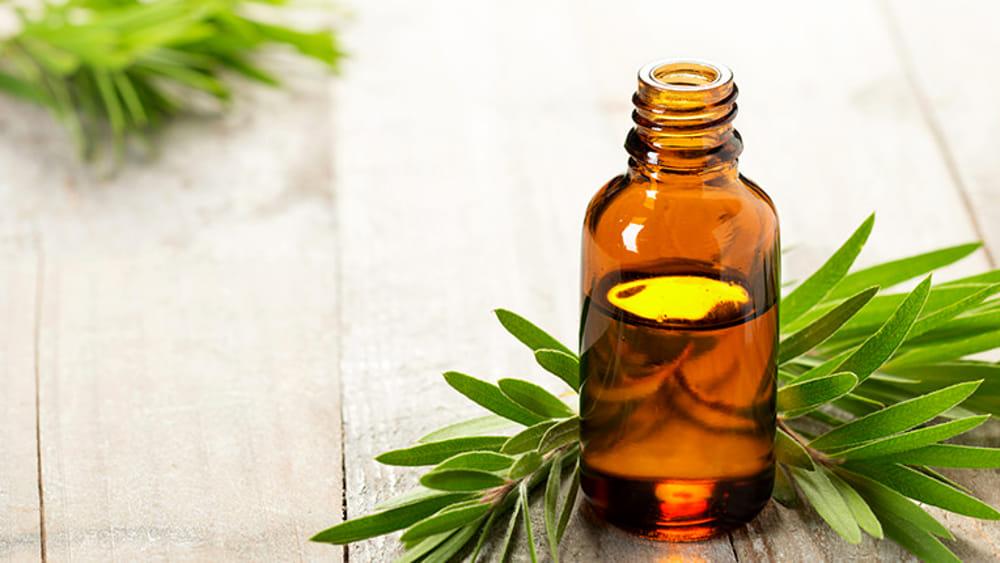 Tea Tree Oil: usi, benefici e proprietà.